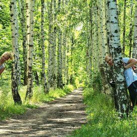 Берёзовая аллея Кумысной поляны