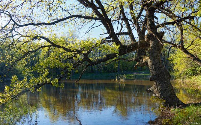 Русалий пруд на Кумысной поляне