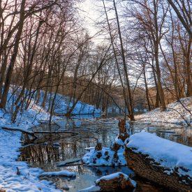 Ручей к Андреевскому пруду