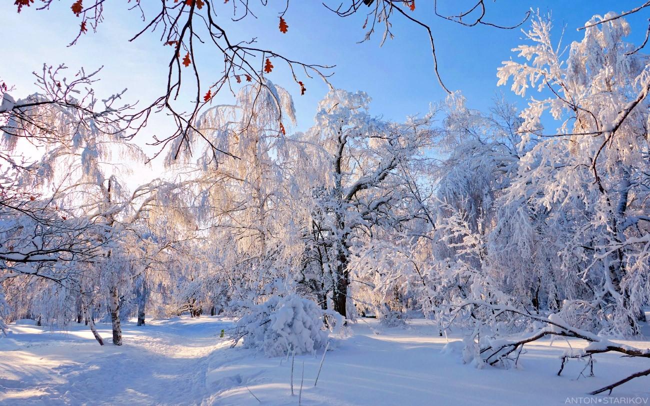 Зимняя Кумысная поляна сверкает на солнце