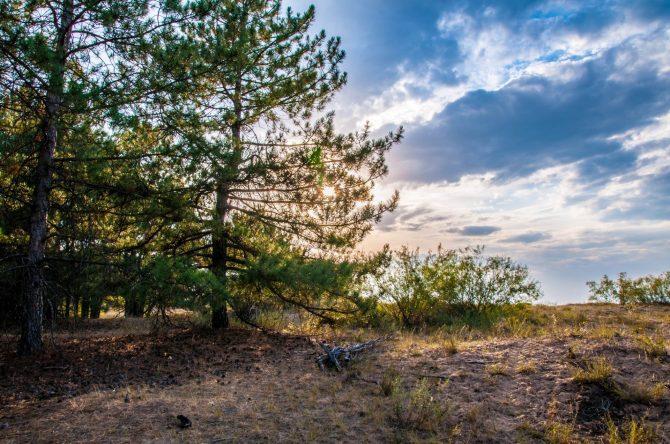 Дьяковский лес
