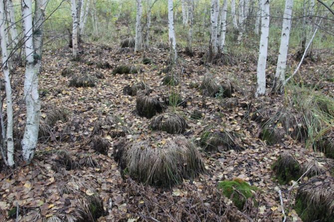 Моховое болото Саратовской области