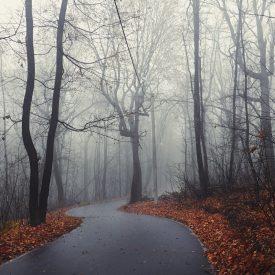 Мистика Лыжероллерной трассы на Кумысной поляне
