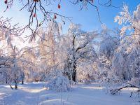 Зимний отдых на Кумысной поляне