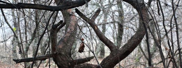 Ведьмин лес
